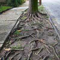 b2ap3_thumbnail_tree-root-damage-4_20160323-015007_1.jpg